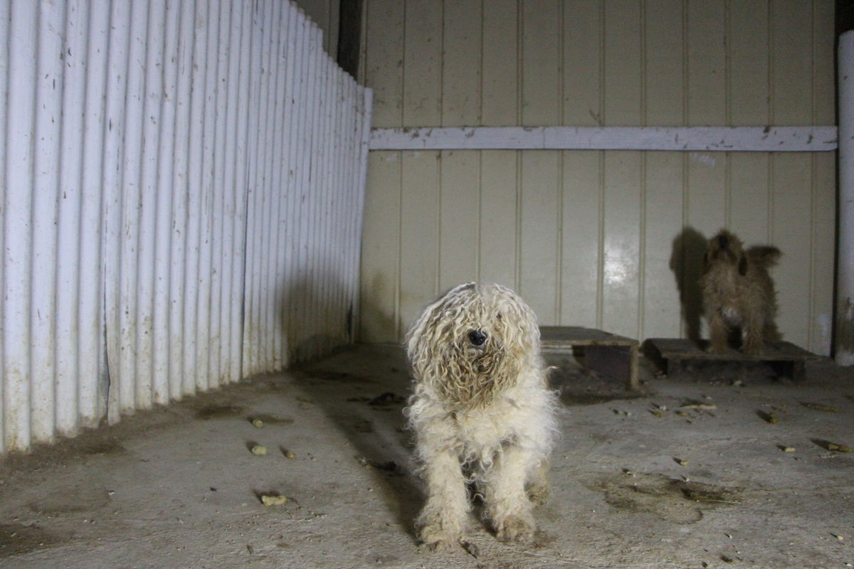 Pass laws to fight West Australian puppy factories!